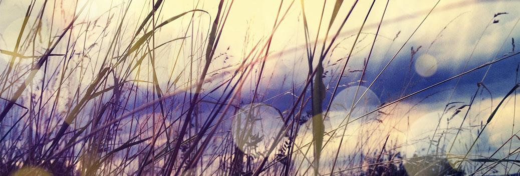Christian-Kreyerhoff-Gras-Gegenlicht